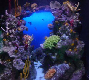 Coral tank Atlantis at Paradise Island